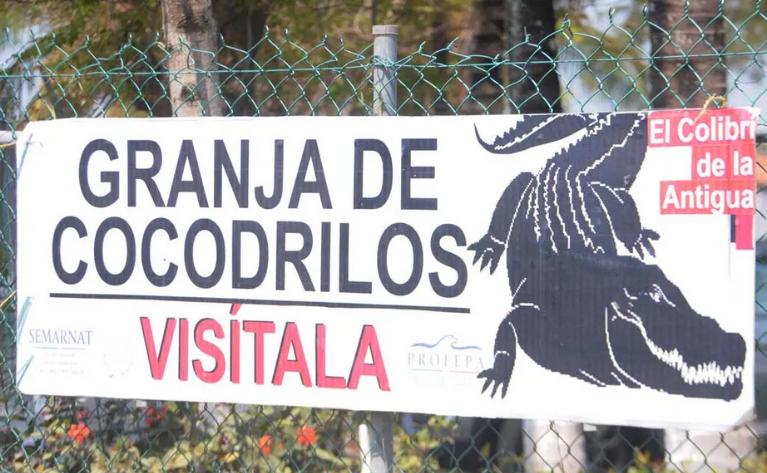 mercado del cocodrilo